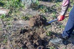 Jardinagem preparando o solo escavando sobre com uma pá de jardim imagem de stock