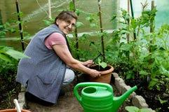 Jardinagem sênior da mulher Fotos de Stock Royalty Free