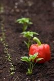 Jardinagem urbana Imagens de Stock