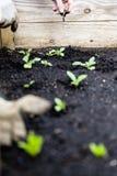 Jardinagem urbana com cama aumentada Foto de Stock Royalty Free