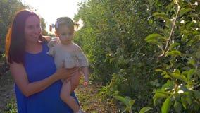 Jardinando, a mulher rural de sorriso com a menina da criança nos braços recolhe maçãs no pomar de fruto durante a estação da col vídeos de arquivo