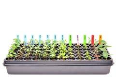 Jardinando, plantas novas em um plano. Fotos de Stock