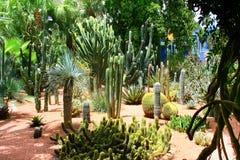 Jardine Majorelle em C4marraquexe, Marrocos Imagens de Stock Royalty Free