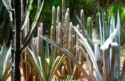 Jardine Majorelle in Marrakesh, Morocco Stock Photos