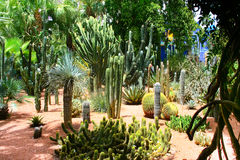 Jardine Majorelle in Marrakesh, Morocco royalty free stock images
