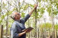 Jardineiro adulto que examina plantas genetically de alteração As mãos que guardam a tabuleta Nos vidros, uma barba, macacões ves foto de stock