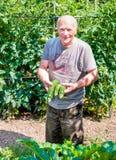 Jardineiro com courgettes orgânicos Imagens de Stock Royalty Free