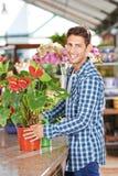 Jardineiro com a flor de flamingo na loja do berçário Imagem de Stock