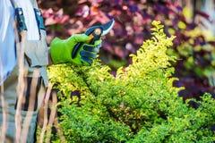 Jardineiro com tesoura de chapa do jardim imagens de stock