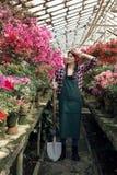 Jardineiro da menina no avental e luvas com uma pá grande, guardando a mão em sua cabeça, olhando afastado na estufa foto de stock royalty free