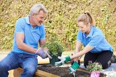 Jardineiro de paisagem que plantam na cama de flor Fotos de Stock Royalty Free