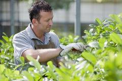 Jardineiro de sorriso Foto de Stock