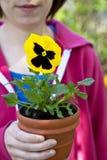 Jardineiro do Pansy Imagens de Stock Royalty Free