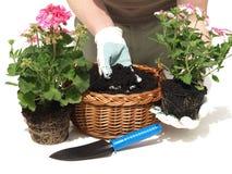 Jardineiro e flores foto de stock royalty free