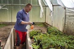 Jardineiro em uma estufa Imagens de Stock