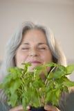 Jardineiro em uma estufa Fotografia de Stock