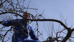Jardineiro especializado que poda os ramos da árvore de maçã na mola adiantada filme