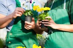 Jardineiro fêmea e masculino no jardim do mercado Imagens de Stock