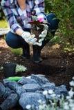 Jardineiro fêmea irreconhecível que mantém a flor bonita pronta para ser plantado em um jardim Conceito de jardinagem Fotografia de Stock Royalty Free