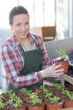 Jardineiro fêmea no berçário Imagens de Stock Royalty Free
