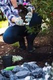 Jardineiro fêmea que mantém uma planta de florescência pronta para ser plantado em seu jardim Conceito de jardinagem Abrandamento Imagem de Stock
