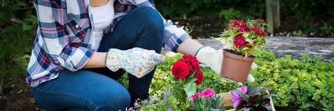 Jardineiro fêmea Unrecognisable que mantém a flor bonita pronta para ser plantado em um jardim Conceito de jardinagem Jardim japo Imagens de Stock