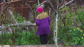 Jardineiro maduro que molha um jardim verde vídeos de arquivo