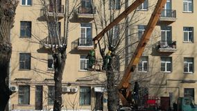 Jardineiro nas árvores do corte do elevador video estoque