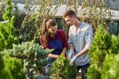 Jardineiro no berçário-jardim em um dia ensolarado morno Menina e gu fotos de stock