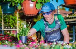 Jardineiro Picking Flowers Imagem de Stock