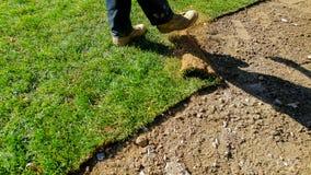 Jardineiro profissional da instalação nova da grama do relvado Rolls da grama no quintal foto de stock
