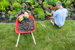 Jardineiro que ajardina um jardim Imagens de Stock Royalty Free