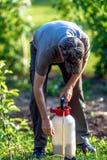 Jardineiro que aplica um adubo do inseticida a seus arbustos do fruto imagem de stock
