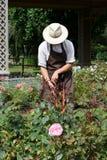 Jardineiro que cava um arbusto cor-de-rosa Imagens de Stock Royalty Free