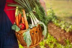Jardineiro que guarda uma cesta com vegetais Fotografia de Stock