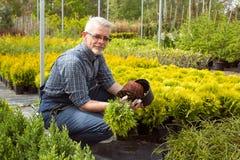 Jardineiro que guarda uma planta pequena da plântula no mercado do jardim imagens de stock royalty free