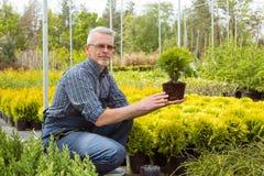 Jardineiro que guarda uma planta pequena da plântula no mercado do jardim fotos de stock