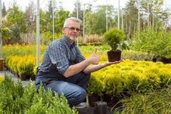 Jardineiro que guarda uma planta pequena da plântula no mercado do jardim imagem de stock royalty free