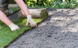 Jardineiro que instala rolos da grama da grama fotos de stock royalty free