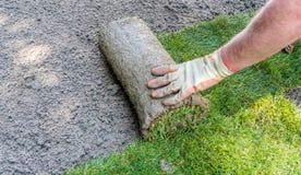 Jardineiro que instala rolos da grama da grama imagens de stock royalty free