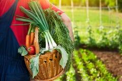 Jardineiro que mantém a cesta completa dos vegetais Fotografia de Stock
