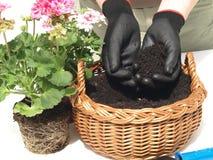 Jardineiro que planta uma flor fotos de stock royalty free