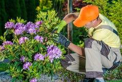 Jardineiro que toma das flores Imagem de Stock