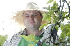 Jardineiro: tesouras de poda Fotografia de Stock Royalty Free