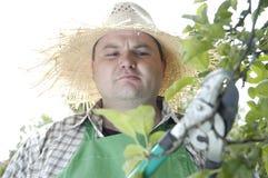 Jardineiro: tesouras de poda Foto de Stock Royalty Free
