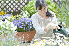 Jardinería Imagen de archivo libre de regalías