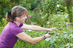 Jardinería Fotos de archivo libres de regalías