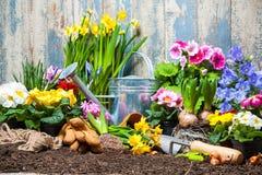 Jardinería imágenes de archivo libres de regalías