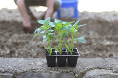 Jardinería Foto de archivo