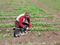 Jardinero 3 Foto de archivo libre de regalías